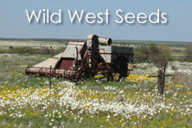 <em>Wil</em>d West Seeds
