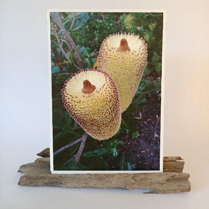Banksia Prints