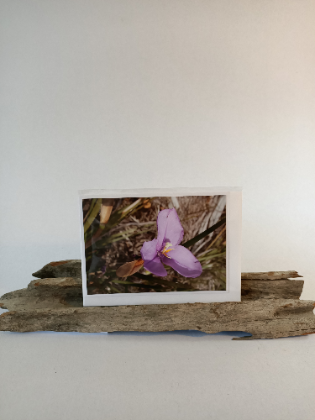 Wildflower Greeting Cards