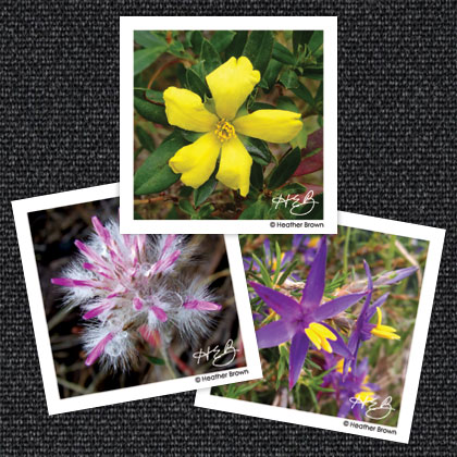 Wildflower Magnets